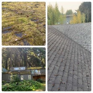 moss-removal-before